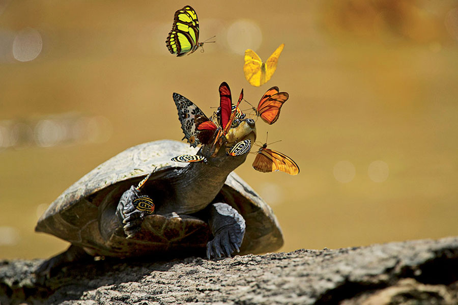 turtle tears and butterflies
