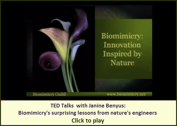 Janine Benyus: Biomimicry's surprising lessons from nature's engineers
